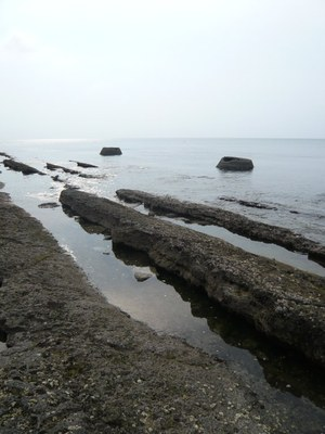 CRAB OCEAN.jpg