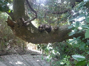 cat on the tree.JPG