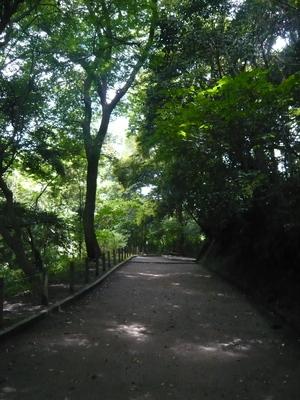 road-2.jpg