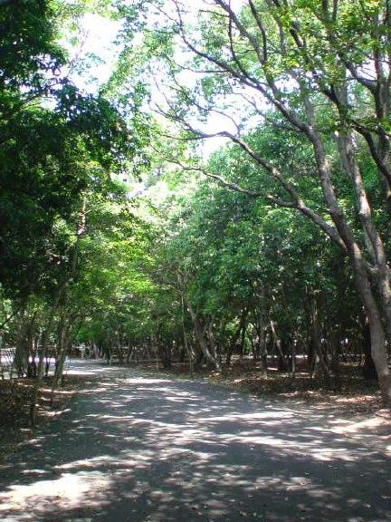 miyazaki tree park.jpg