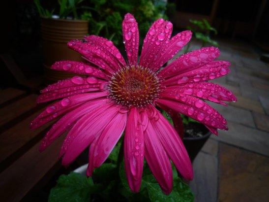 f.d.flower.jpg